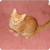 Adopt A Pet :: Ranger - Spotsylvania, VA