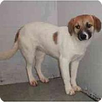 Adopt A Pet :: Jewel - Pending! - kennebunkport, ME