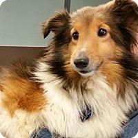 Adopt A Pet :: Bootie/Peanut - COLUMBUS, OH