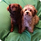 Adopt A Pet :: Ginny and Dakota