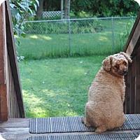 Adopt A Pet :: ANNE NICHOLE - Elk River, MN