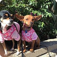 Adopt A Pet :: Tabitha & Kona - Costa Mesa, CA