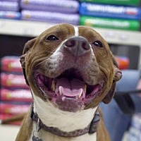 Adopt A Pet :: Hazel *Needs Foster* - Fairfax, VA