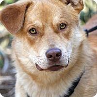 Adopt A Pet :: Ozzy - Marietta, GA