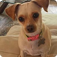Adopt A Pet :: CHLOE - Fort Lauderdale, FL