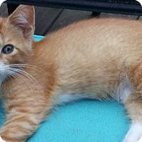Adopt A Pet :: Max - Parkton, NC
