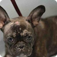 Adopt A Pet :: BRISTOL - Brooklyn, NY