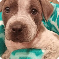Adopt A Pet :: Hyacinth (FORT COLLINS) - Fort Collins, CO