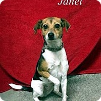 Adopt A Pet :: Janet - Lacon, IL