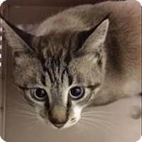 Adopt A Pet :: Julian - Oceanside, CA