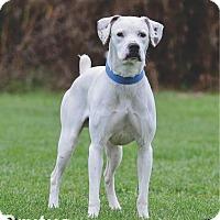 Adopt A Pet :: Brutus - Ottumwa, IA