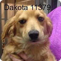 Adopt A Pet :: Dakota - Alexandria, VA