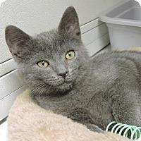 Adopt A Pet :: Catherine - Massapequa, NY