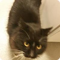Adopt A Pet :: Armani - Cumming, GA