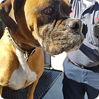 Adopt A Pet :: Sundance Kid - Austin, TX