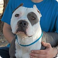 Adopt A Pet :: Donald - Las Vegas, NV