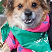 Adopt A Pet :: Shiney - Washington, DC