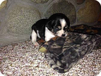 Remington Dog Adoption Washington