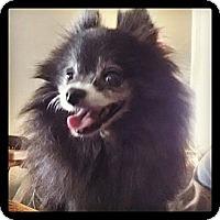 Adopt A Pet :: GiGi - Hubertus, WI