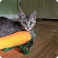 Adopt A Pet :: Monterrey - Monroe, GA