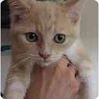 Adopt A Pet :: kish - Davis, CA