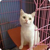 Adopt A Pet :: Marlee - Tucson, AZ