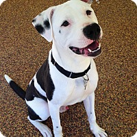 Adopt A Pet :: Roscoe - Atlanta, GA