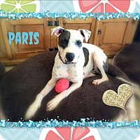 Adopt A Pet :: Paris (aka Sasha) - Higley, AZ