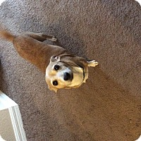 Adopt A Pet :: Nettie - S. Pasedena, FL