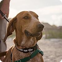 Adopt A Pet :: Pistol Pete - Charelston, SC
