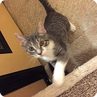 Adopt A Pet :: Lily - McHenry, IL