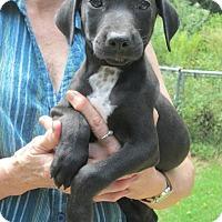 Adopt A Pet :: Odie - Brookside, NJ