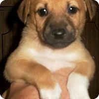 Adopt A Pet :: Molly - Philadelphia, PA