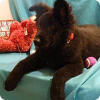 Adopt A Pet :: BlackBeary - Vacaville, CA