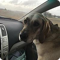 Adopt A Pet :: Annie - Warsaw, IN
