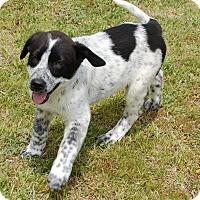 Adopt A Pet :: Tron - Manning, SC