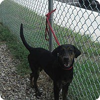 Adopt A Pet :: Pudding - Mt. Gilead, OH