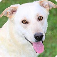 Adopt A Pet :: DUKE(SOOOO SMART!!) - Wakefield, RI