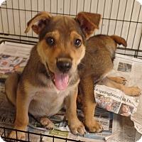 Adopt A Pet :: Luke - Philadelphia, PA