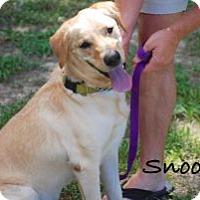 Adopt A Pet :: Snook - Minneola, FL