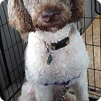 Adopt A Pet :: Havana - Alpharetta, GA