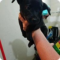 Adopt A Pet :: Zuma - Ashville, OH