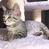 Adopt A Pet :: Mogwai - Austin, TX