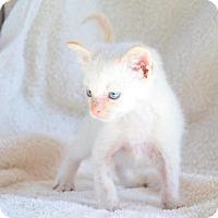 Adopt A Pet :: Lance - Midland, TX