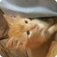 Adopt A Pet :: Chris - San Antonio, TX