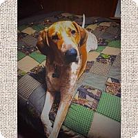 Adopt A Pet :: Fritz - Coldwater, MI