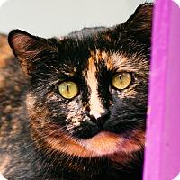 Adopt A Pet :: Rosie - Brimfield, MA