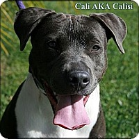 Adopt A Pet :: Calisi AKA Cali - West Hills, CA