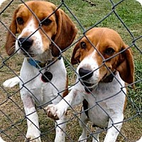 Adopt A Pet :: Harry & Sally (M/F Pair) - Indianapolis, IN