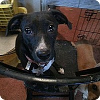 Adopt A Pet :: Whitney - New orleans, LA